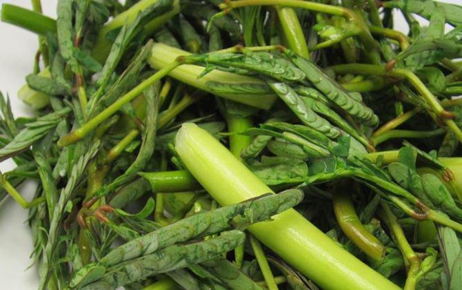 Image result for Rau nhút